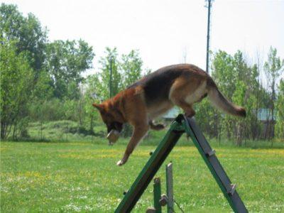 addestramentonico-salto-palizzata
