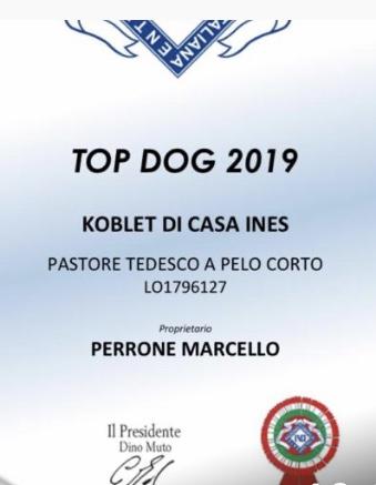 koblet top dog 19